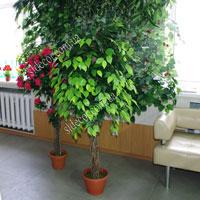 Искусственное дерево своими руками больших размеров 567