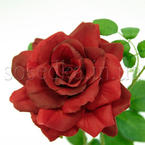 Головка красной розы Голландия