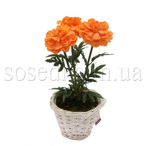 Цветы в горшочках купить