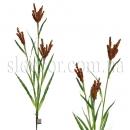 Высокая цветущая трава
