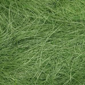 Сизаль лесной зеленый